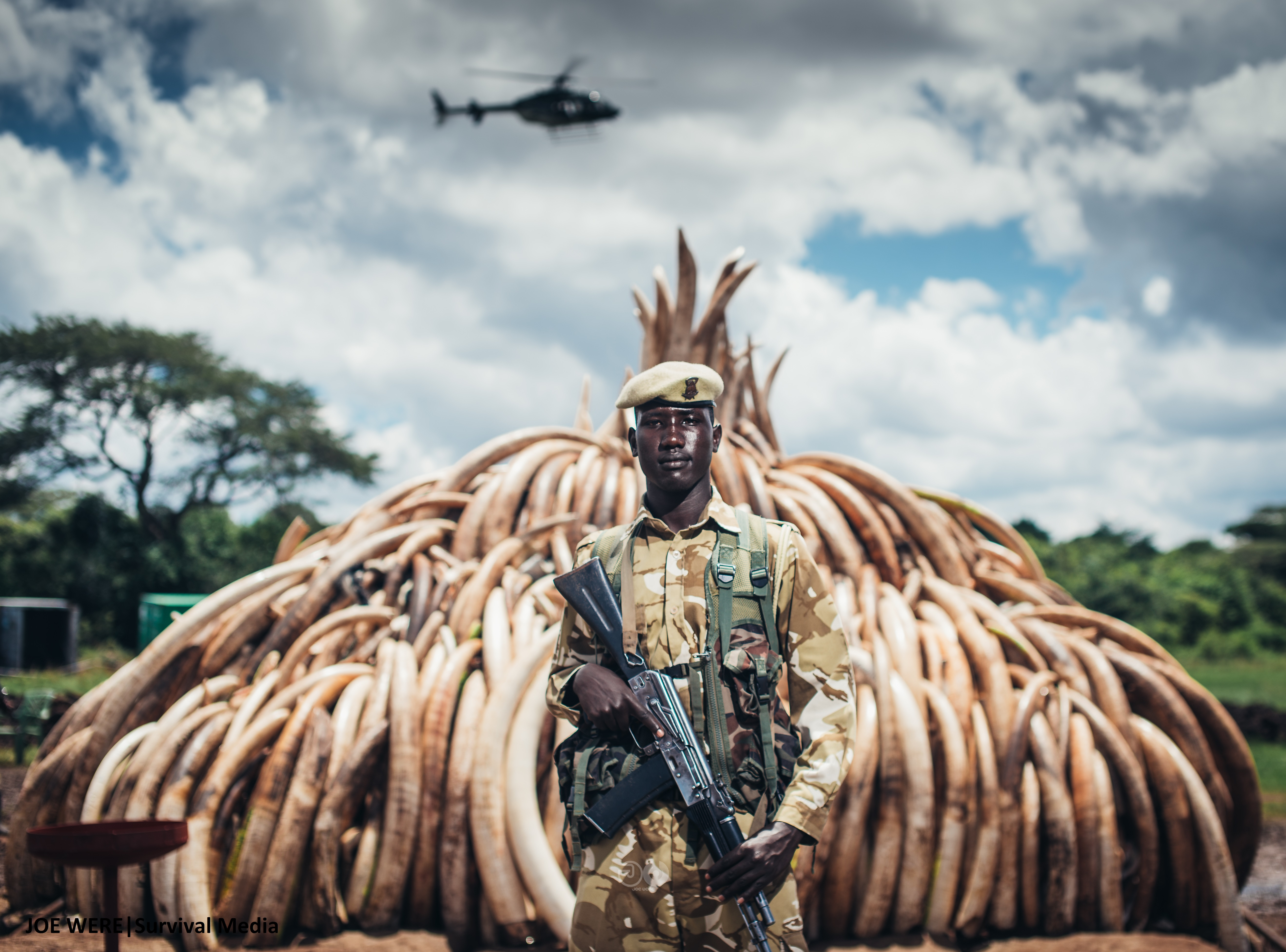 Ranger Moses of the Kenya Wildlife Service watching over a stockpile of confiscated ivory. 105 tonnes of Elephant Ivory seized, 1 tonne of Rhino horn confiscated... Over 10,000 elephants killed that deprives Kenya up to $17b in tourism revenue. 